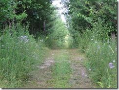 path with bee balm