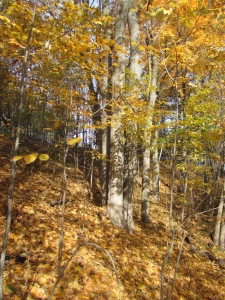 fall in the ravine