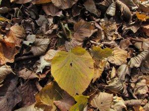 the leaf (640x480)
