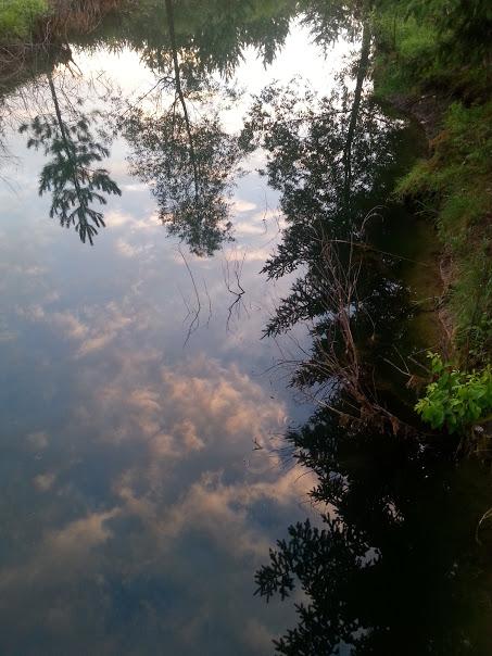 pond before the rain.jpg